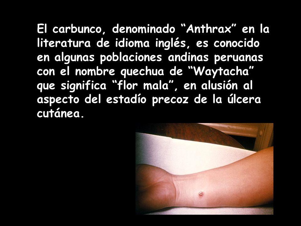 El carbunco, denominado Anthrax en la literatura de idioma inglés, es conocido en algunas poblaciones andinas peruanas con el nombre quechua de Waytacha que significa flor mala , en alusión al aspecto del estadío precoz de la úlcera cutánea.