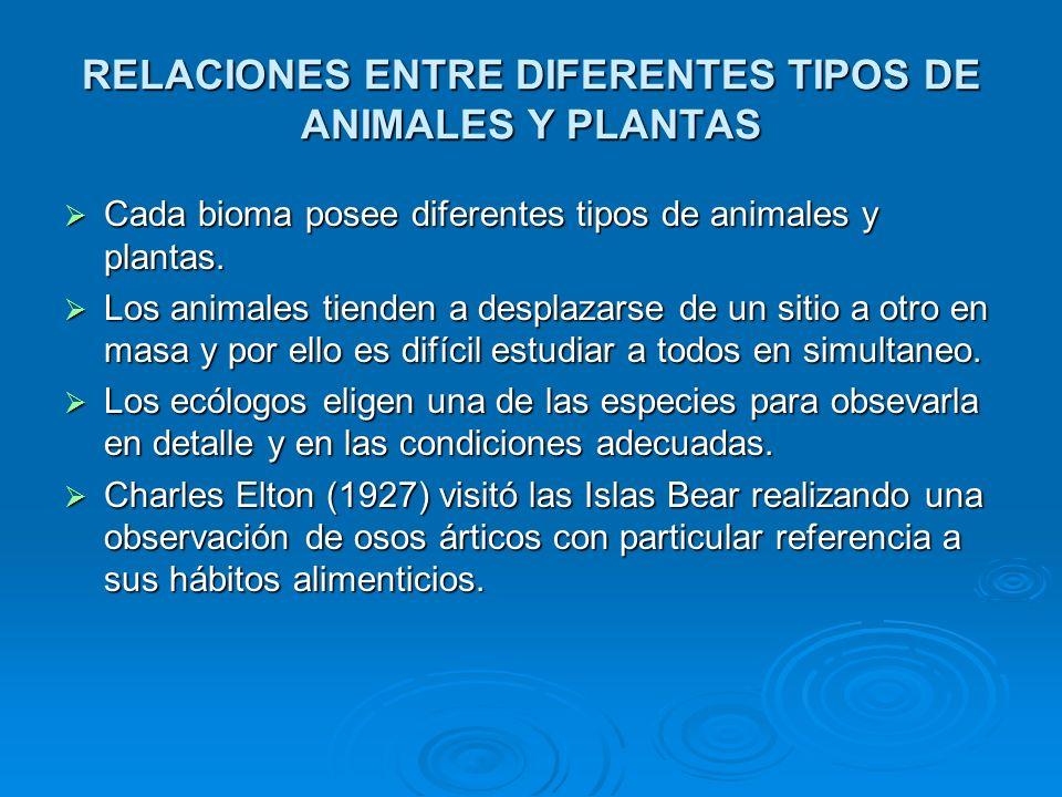 RELACIONES ENTRE DIFERENTES TIPOS DE ANIMALES Y PLANTAS