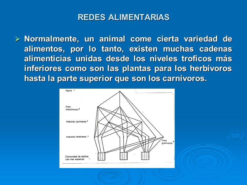 REDES ALIMENTARIAS