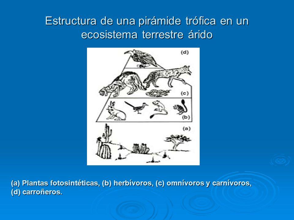 Estructura de una pirámide trófica en un ecosistema terrestre árido