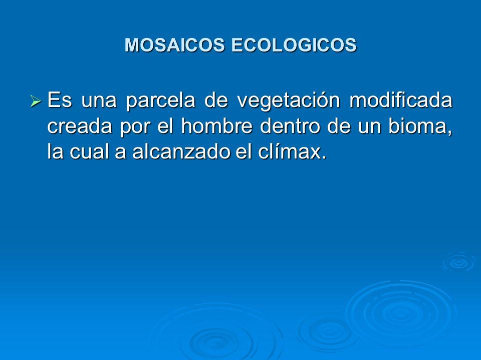 MOSAICOS ECOLOGICOS Es una parcela de vegetación modificada creada por el hombre dentro de un bioma, la cual a alcanzado el clímax.