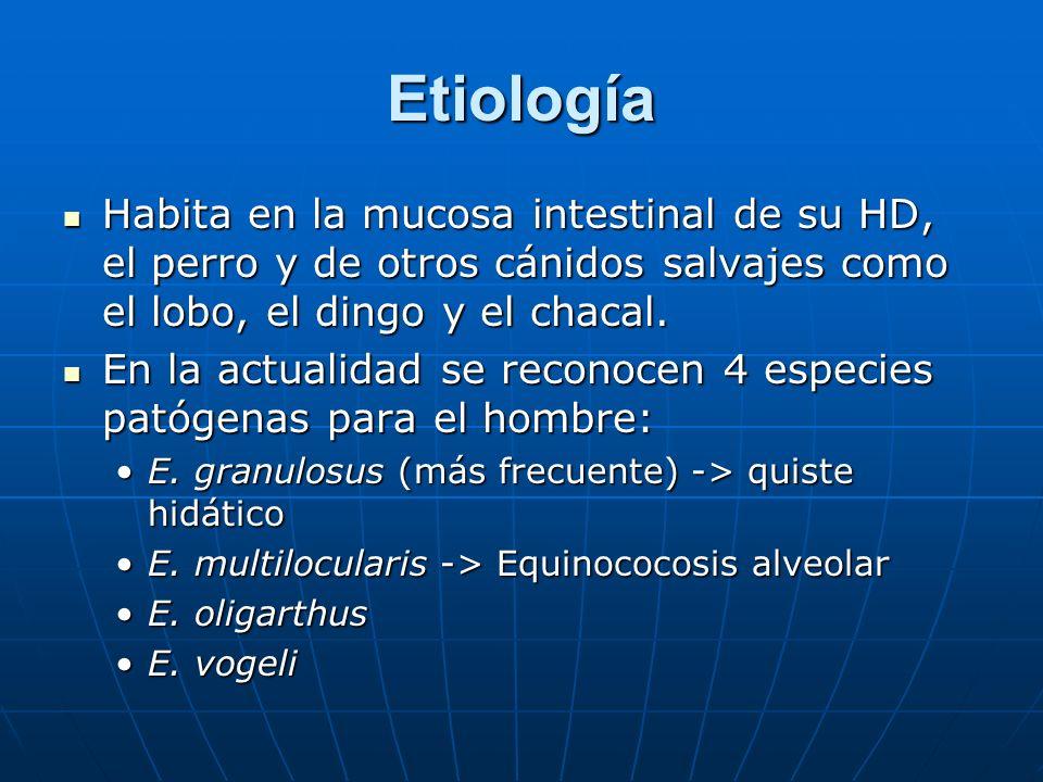 Etiología Habita en la mucosa intestinal de su HD, el perro y de otros cánidos salvajes como el lobo, el dingo y el chacal.