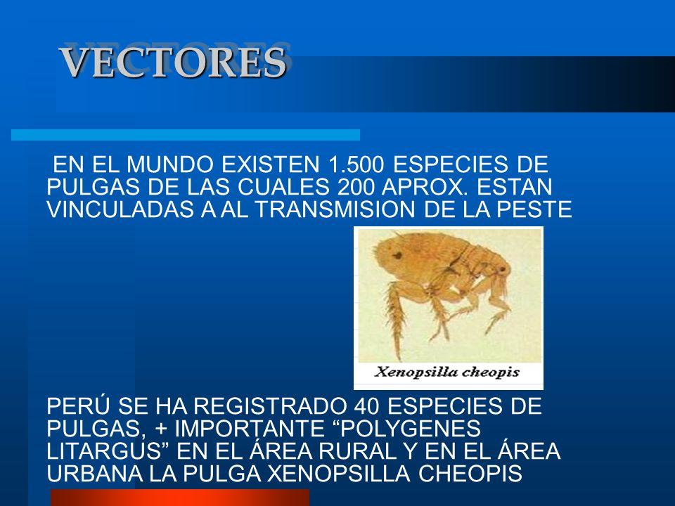 VECTORESEN EL MUNDO EXISTEN 1.500 ESPECIES DE PULGAS DE LAS CUALES 200 APROX. ESTAN VINCULADAS A AL TRANSMISION DE LA PESTE.