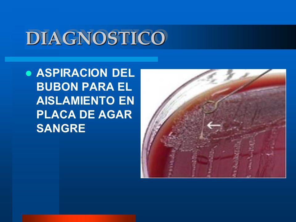 DIAGNOSTICO ASPIRACION DEL BUBON PARA EL AISLAMIENTO EN PLACA DE AGAR SANGRE