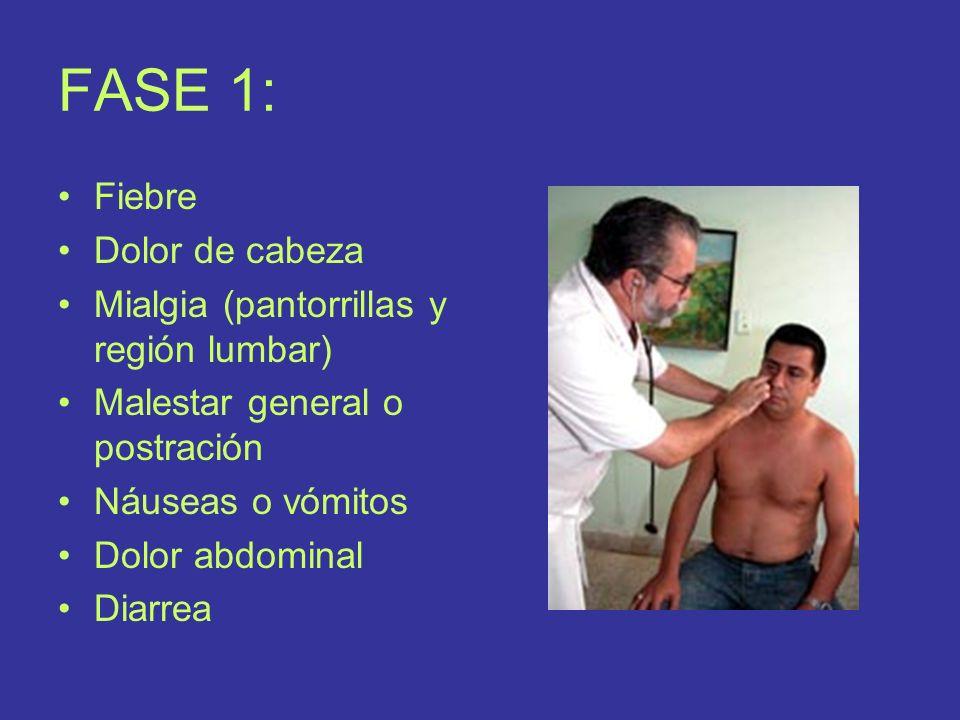 FASE 1: Fiebre Dolor de cabeza Mialgia (pantorrillas y región lumbar)