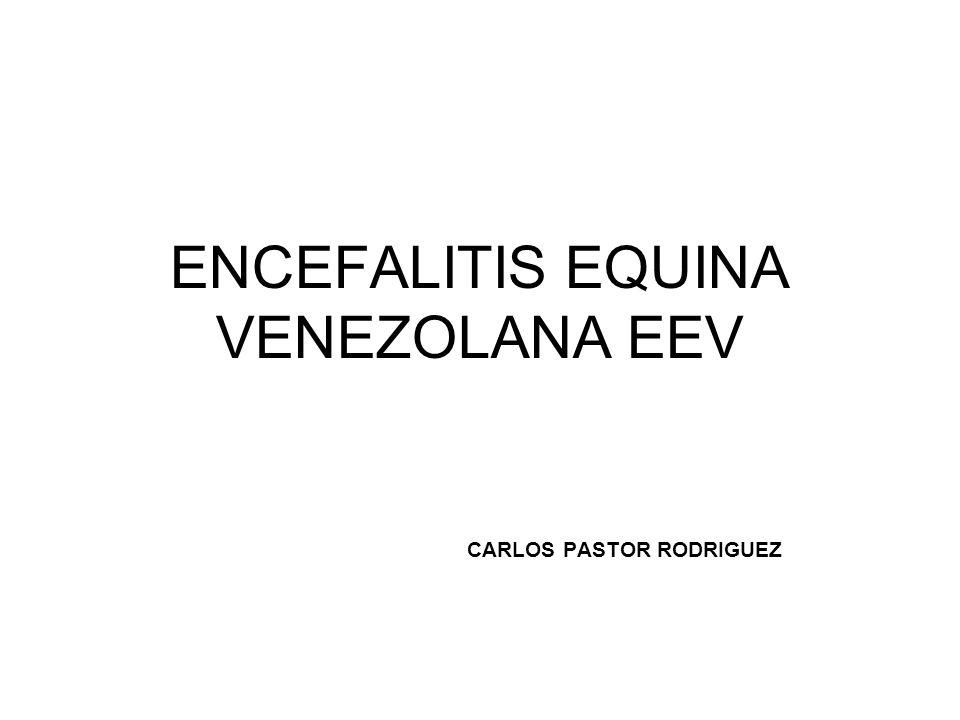 ENCEFALITIS EQUINA VENEZOLANA EEV