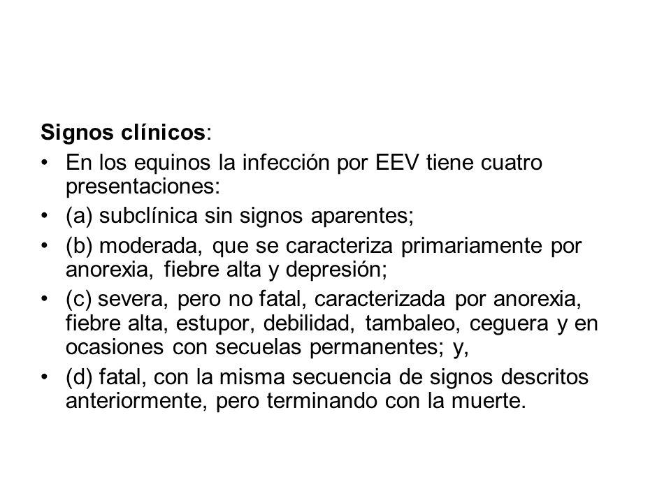 Signos clínicos: En los equinos la infección por EEV tiene cuatro presentaciones: (a) subclínica sin signos aparentes;