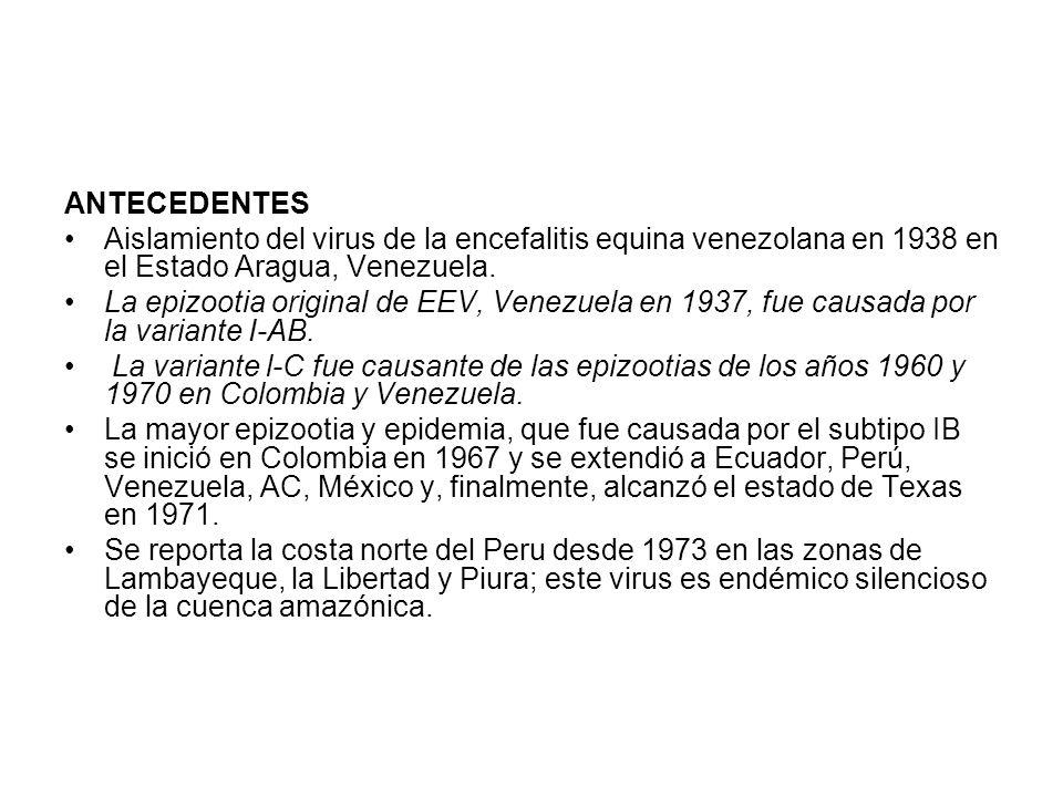 ANTECEDENTES Aislamiento del virus de la encefalitis equina venezolana en 1938 en el Estado Aragua, Venezuela.