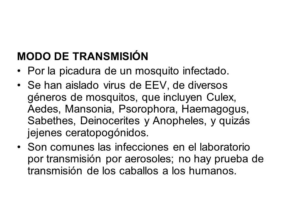 MODO DE TRANSMISIÓN Por la picadura de un mosquito infectado.