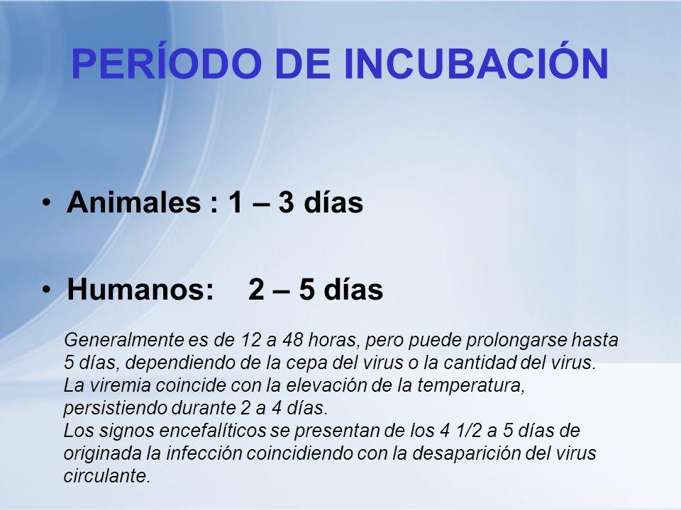 PERÍODO DE INCUBACIÓN Animales : 1 – 3 días Humanos: 2 – 5 días