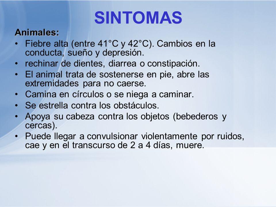 SINTOMAS Animales: Fiebre alta (entre 41°C y 42°C). Cambios en la conducta, sueño y depresión. rechinar de dientes, diarrea o constipación.