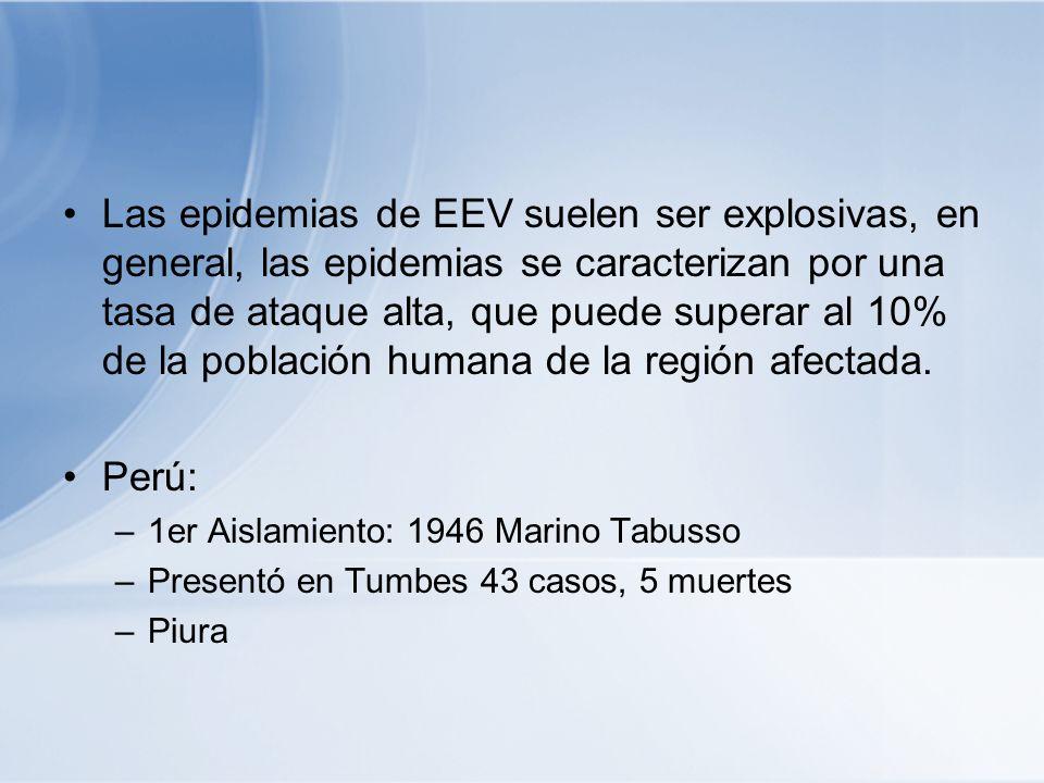 Las epidemias de EEV suelen ser explosivas, en general, las epidemias se caracterizan por una tasa de ataque alta, que puede superar al 10% de la población humana de la región afectada.