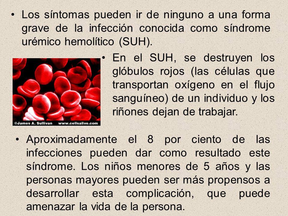 Los síntomas pueden ir de ninguno a una forma grave de la infección conocida como síndrome urémico hemolítico (SUH).