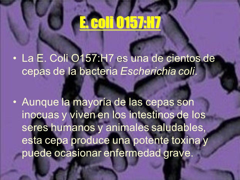 E. coli 0157:H7 La E. Coli O157:H7 es una de cientos de cepas de la bacteria Escherichia coli.