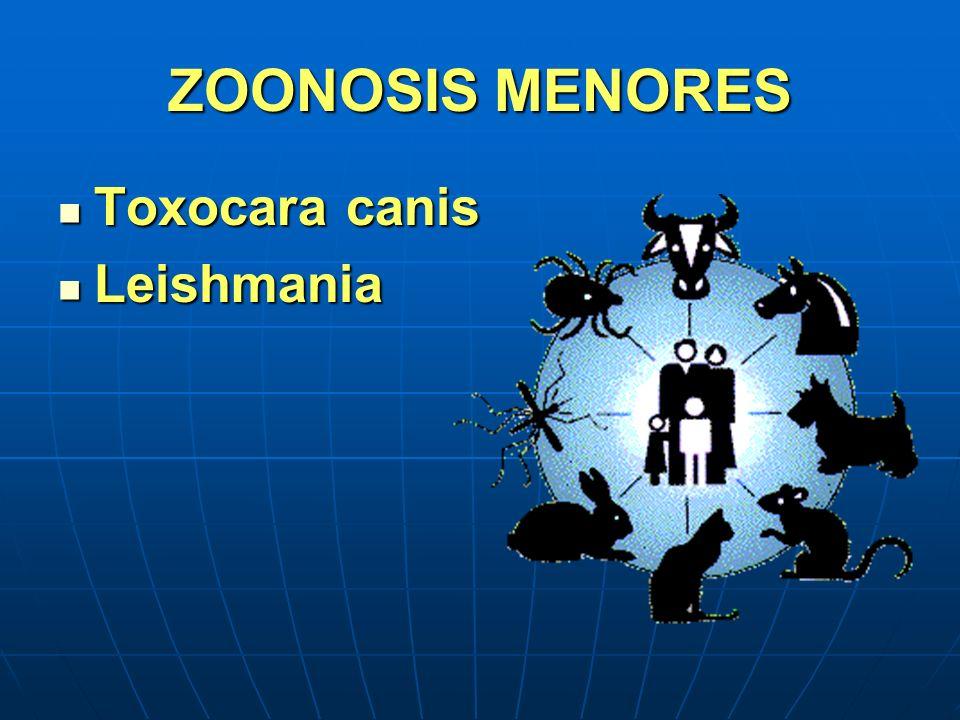 ZOONOSIS MENORES Toxocara canis Leishmania