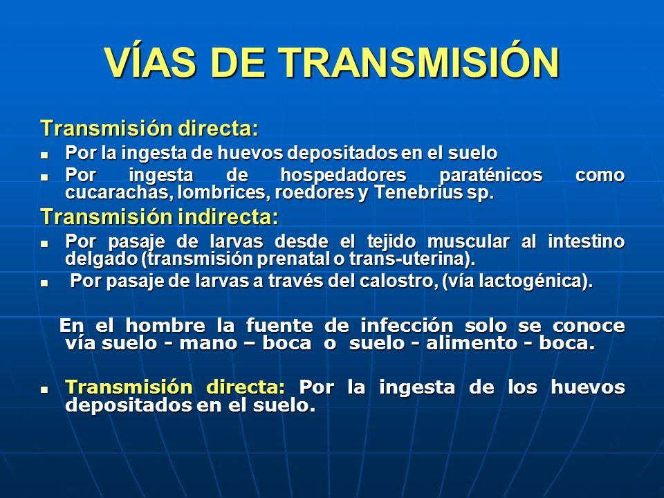 VÍAS DE TRANSMISIÓN Transmisión directa: Transmisión indirecta: