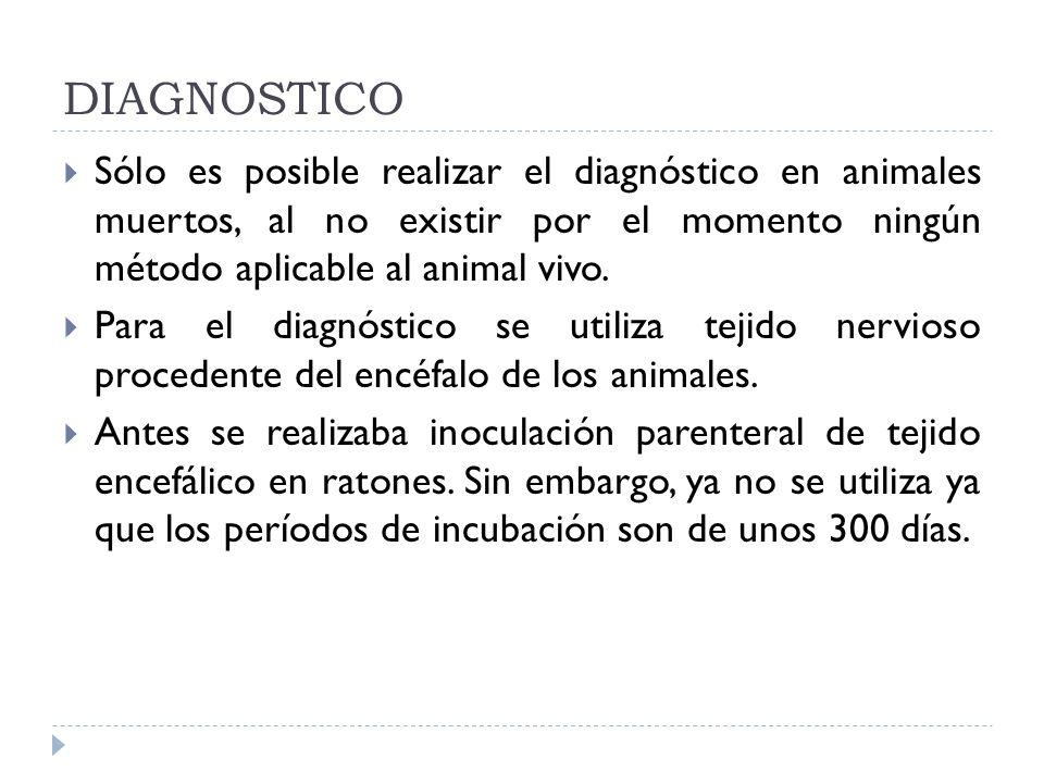 DIAGNOSTICO Sólo es posible realizar el diagnóstico en animales muertos, al no existir por el momento ningún método aplicable al animal vivo.