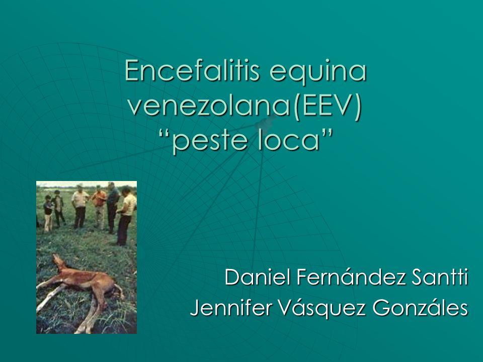 Encefalitis equina venezolana(EEV) peste loca