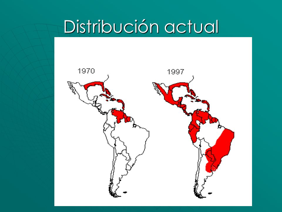 Distribución actual