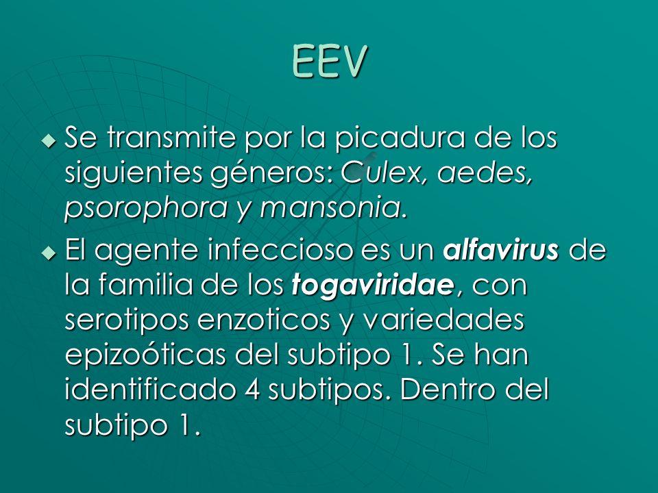 EEV Se transmite por la picadura de los siguientes géneros: Culex, aedes, psorophora y mansonia.