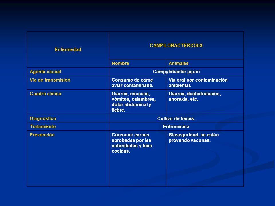 EnfermedadCAMPILOBACTERIOSIS. Hombre. Animales. Agente causal. Campylobacter jejuni. Vía de transmisión.
