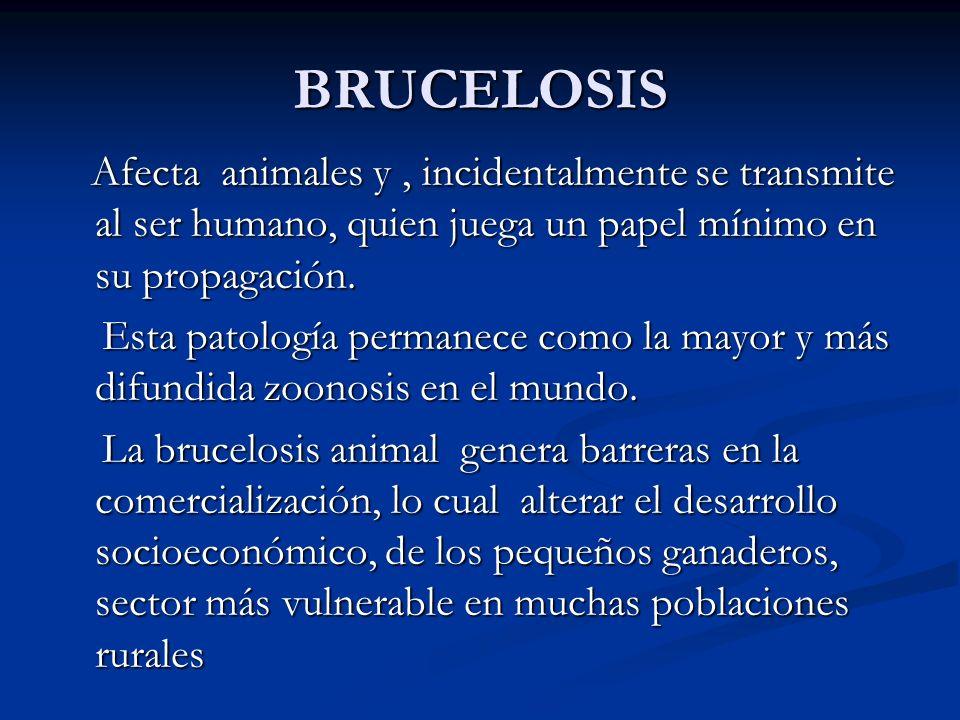 BRUCELOSIS Afecta animales y , incidentalmente se transmite al ser humano, quien juega un papel mínimo en su propagación.