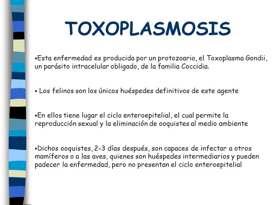 TOXOPLASMOSIS Esta enfermedad es producida por un protozoario, el Toxoplasma Gondii, un parásito intracelular obligado, de la familia Coccidia.