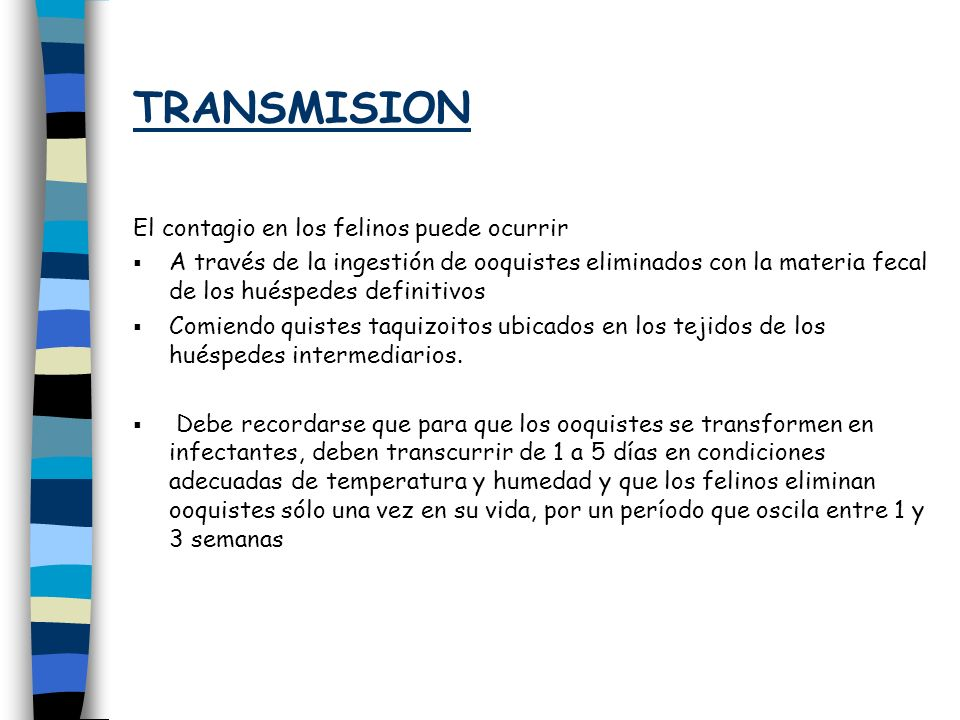 TRANSMISION El contagio en los felinos puede ocurrir