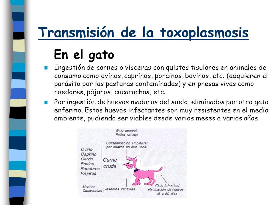 Transmisión de la toxoplasmosis