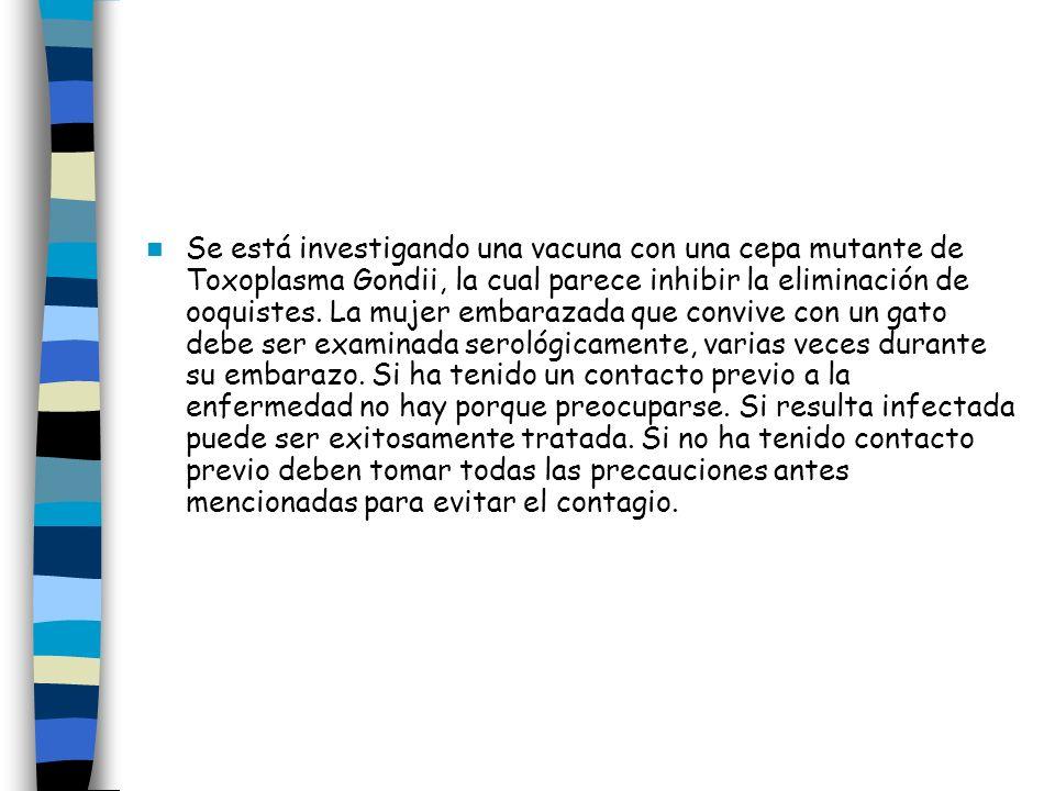 Se está investigando una vacuna con una cepa mutante de Toxoplasma Gondii, la cual parece inhibir la eliminación de ooquistes.