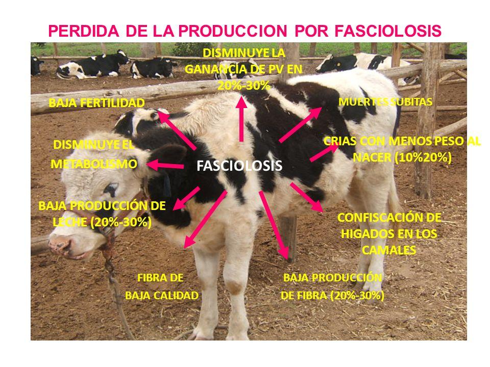 PERDIDA DE LA PRODUCCION POR FASCIOLOSIS