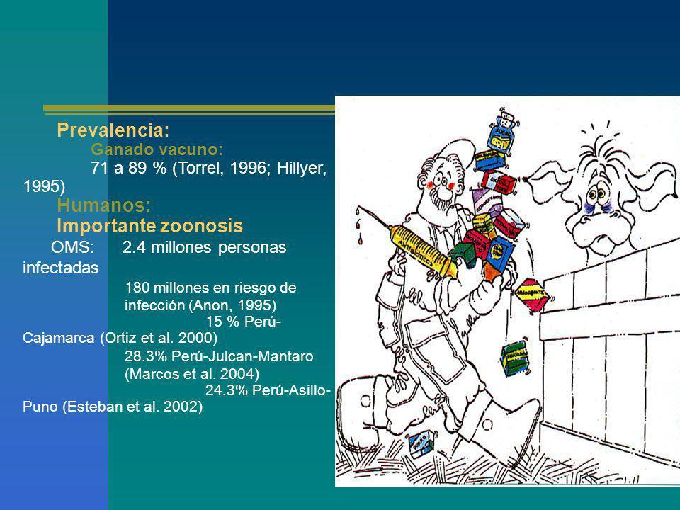 Prevalencia: Humanos: Importante zoonosis Ganado vacuno: