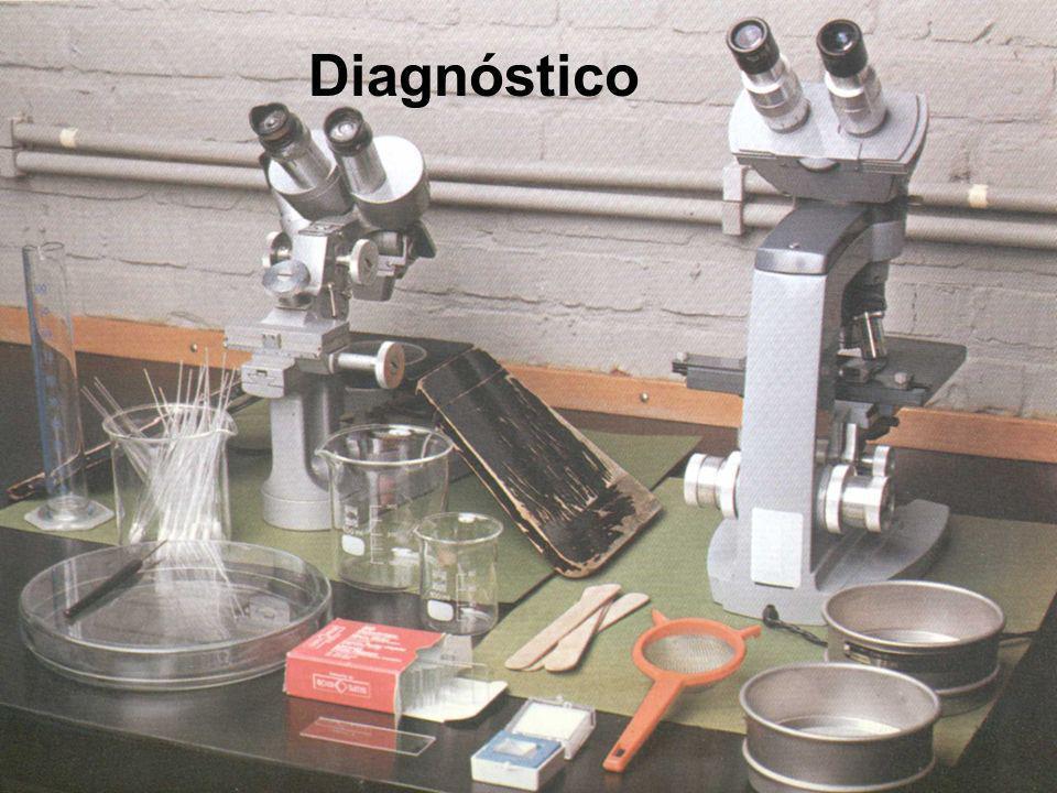 Diagnóstico 8 8
