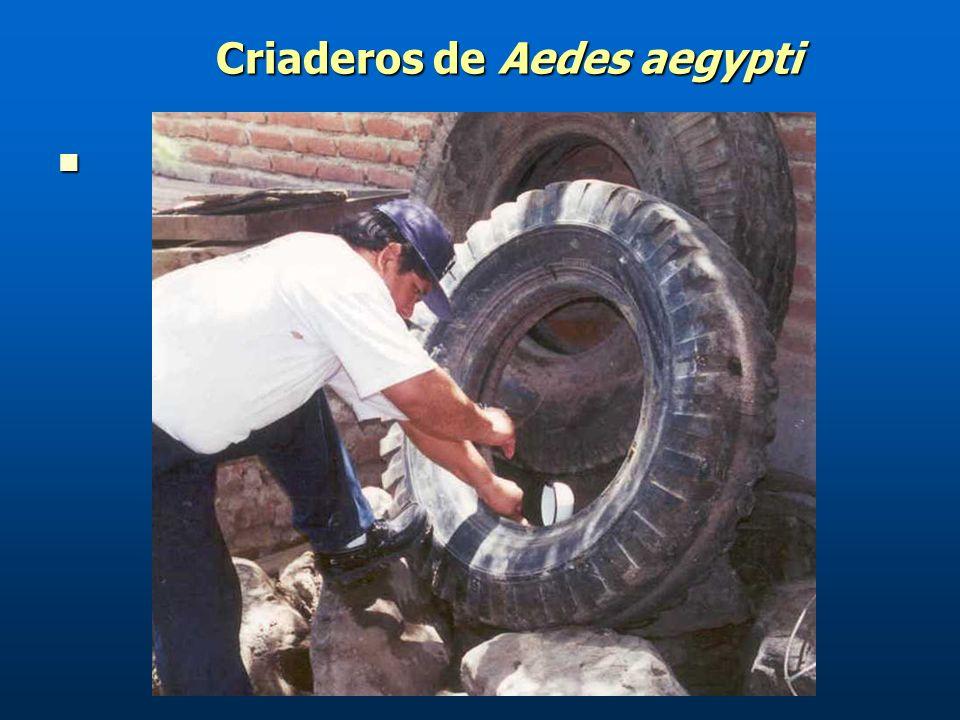 Criaderos de Aedes aegypti