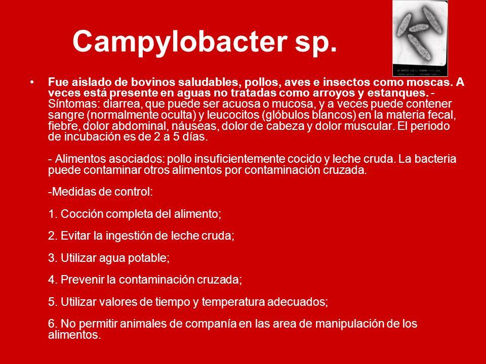 Campylobacter sp.