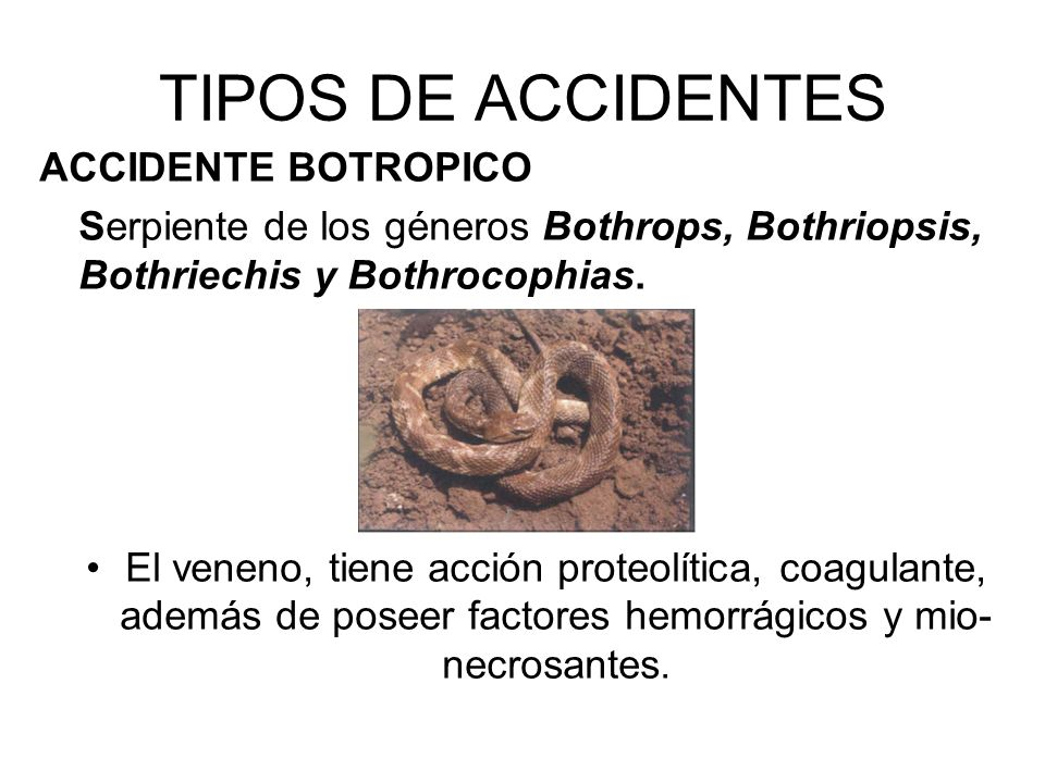TIPOS DE ACCIDENTES ACCIDENTE BOTROPICO