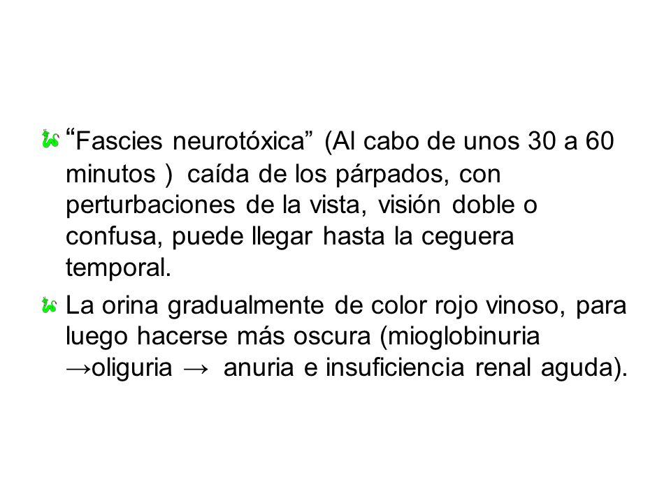 Fascies neurotóxica (Al cabo de unos 30 a 60 minutos ) caída de los párpados, con perturbaciones de la vista, visión doble o confusa, puede llegar hasta la ceguera temporal.
