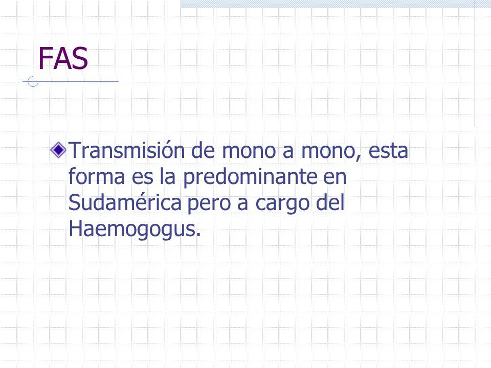 FAS Transmisión de mono a mono, esta forma es la predominante en Sudamérica pero a cargo del Haemogogus.