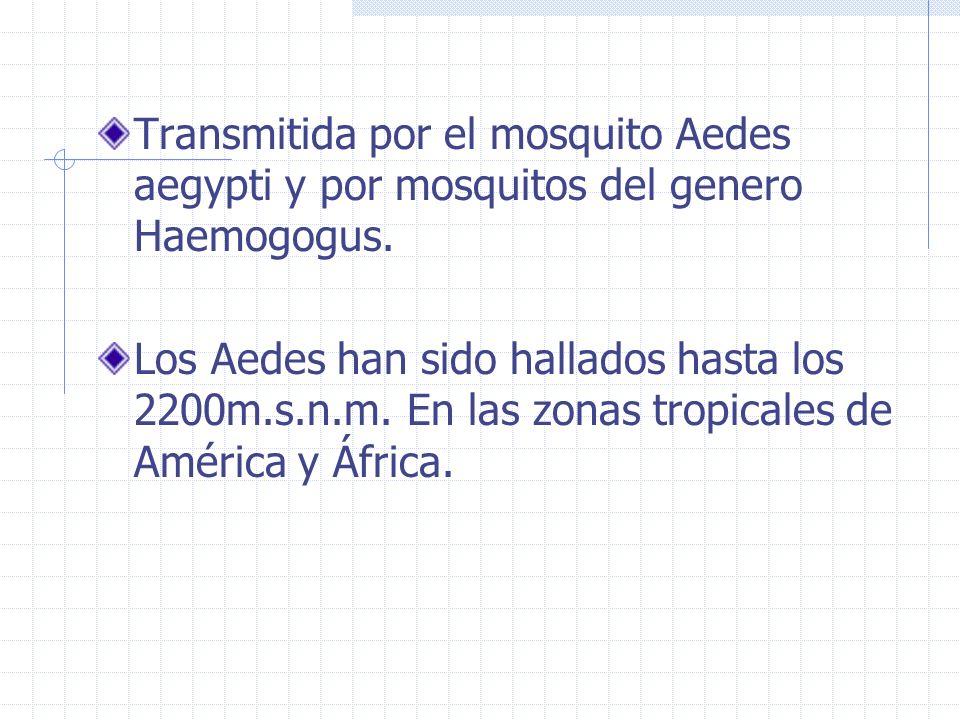 Transmitida por el mosquito Aedes aegypti y por mosquitos del genero Haemogogus.