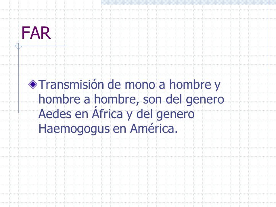 FARTransmisión de mono a hombre y hombre a hombre, son del genero Aedes en África y del genero Haemogogus en América.