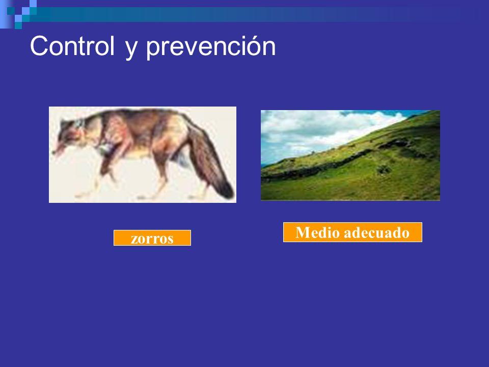 Control y prevención Medio adecuado zorros