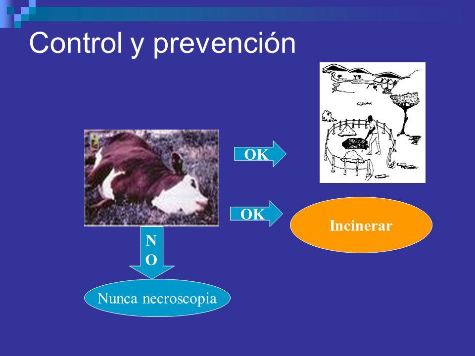 Control y prevención OK Incinerar OK N O Nunca necroscopia