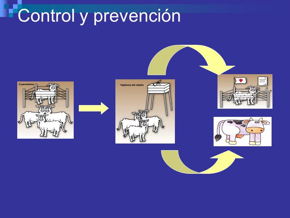 Control y prevención
