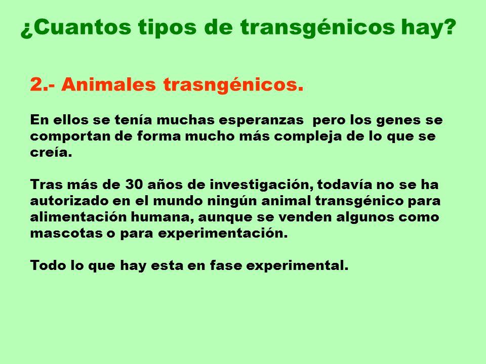 ¿Cuantos tipos de transgénicos hay