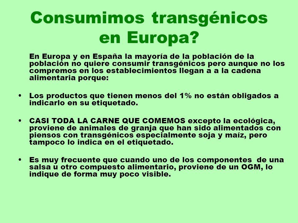 Consumimos transgénicos en Europa