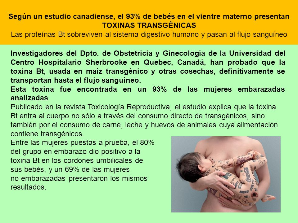 Según un estudio canadiense, el 93% de bebés en el vientre materno presentan TOXINAS TRANSGÉNICAS Las proteínas Bt sobreviven al sistema digestivo humano y pasan al flujo sanguíneo