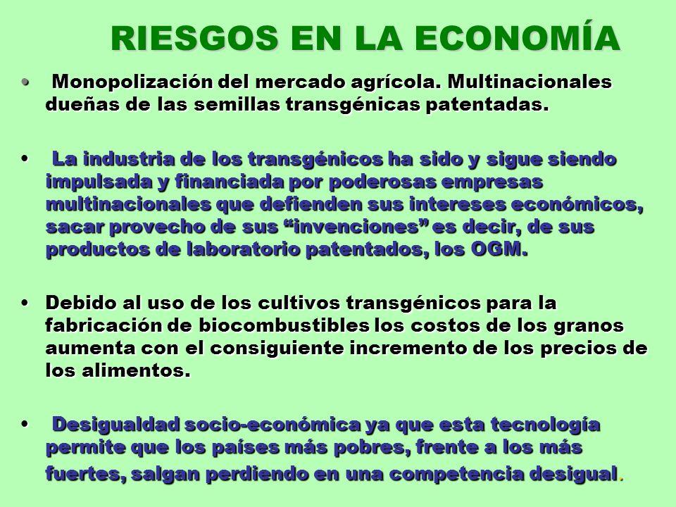 RIESGOS EN LA ECONOMÍAMonopolización del mercado agrícola. Multinacionales dueñas de las semillas transgénicas patentadas.