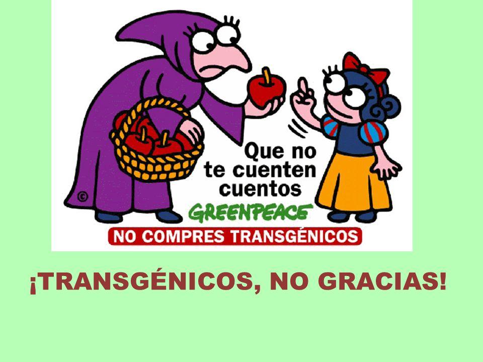 ¡TRANSGÉNICOS, NO GRACIAS!