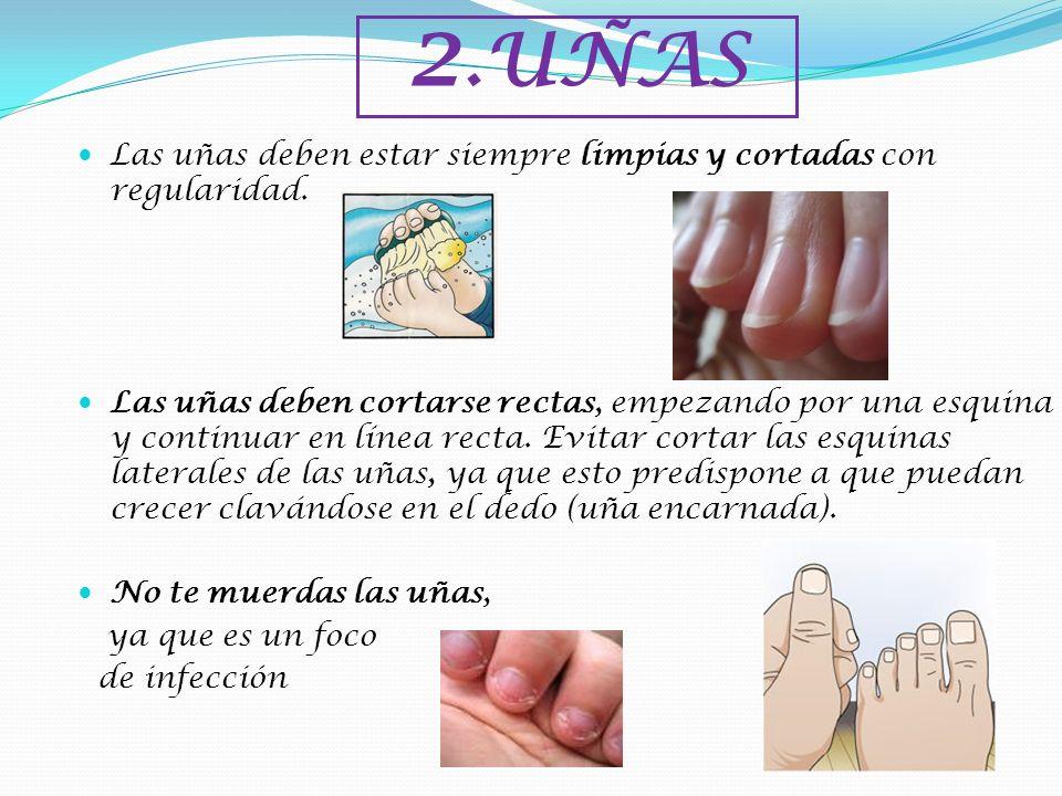 2.UÑASLas uñas deben estar siempre limpias y cortadas con regularidad.