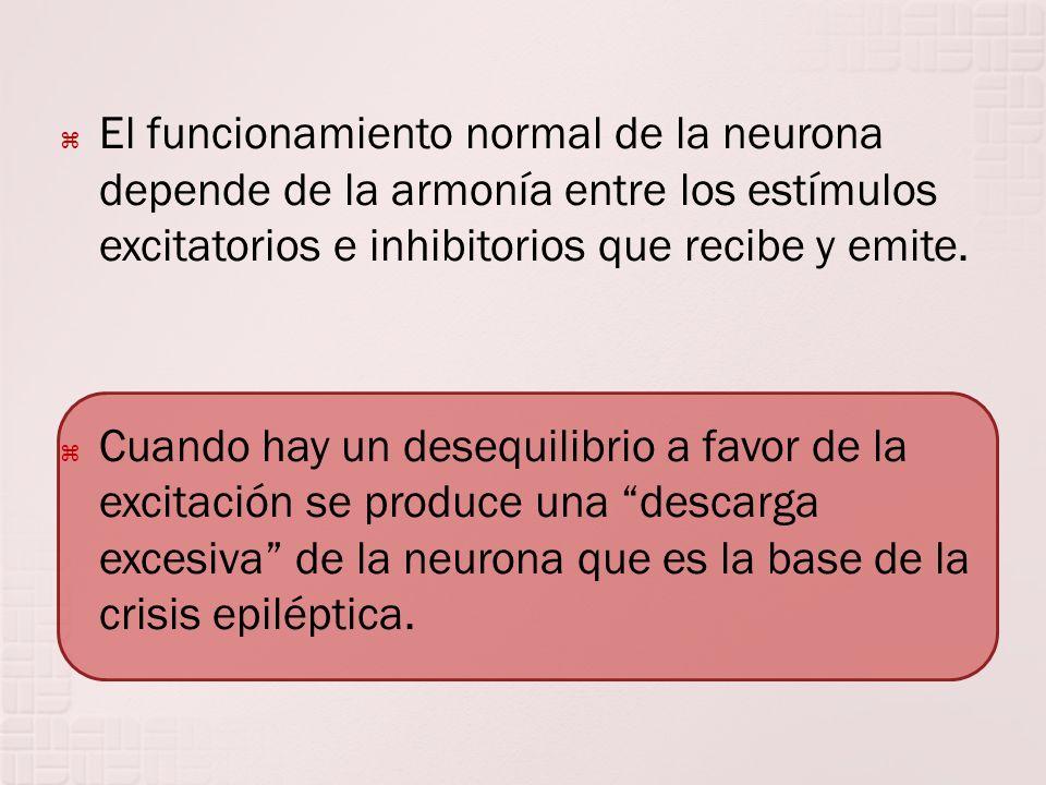 El funcionamiento normal de la neurona depende de la armonía entre los estímulos excitatorios e inhibitorios que recibe y emite.